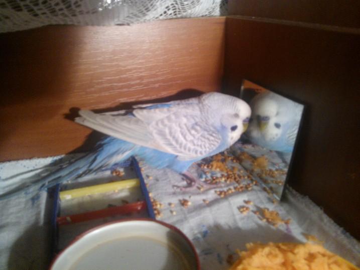 Попугай плохо стоит на лапах - WP_001521.jpg
