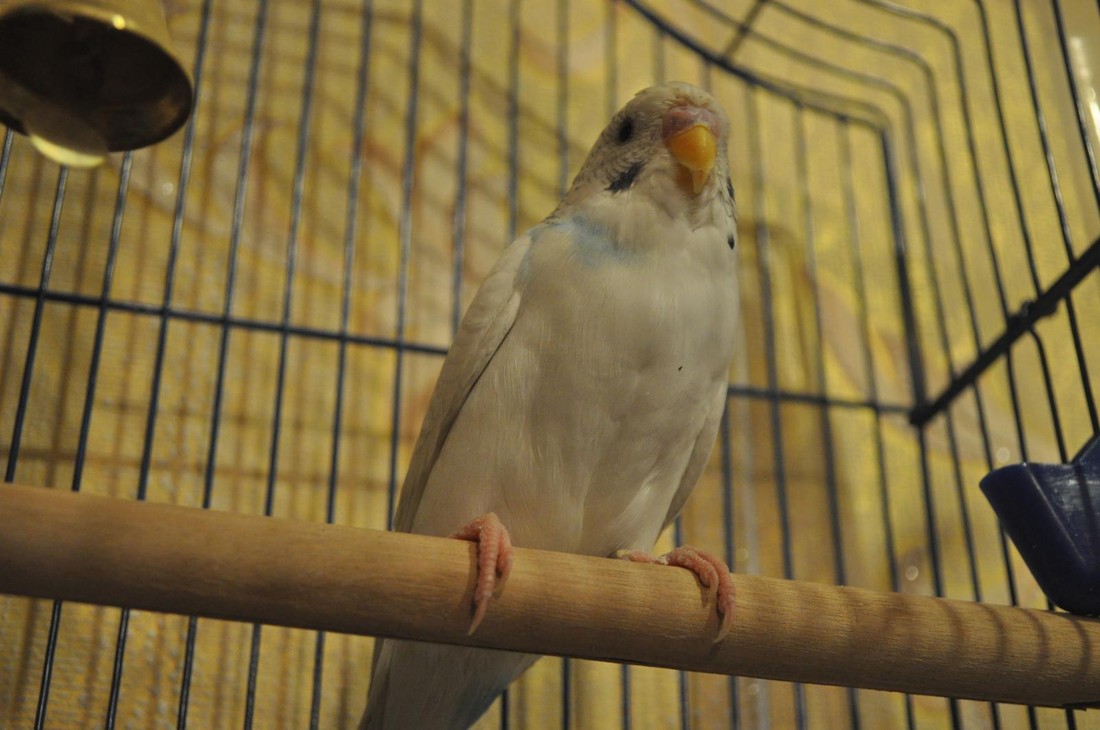 птиц - DSC_1283.JPG