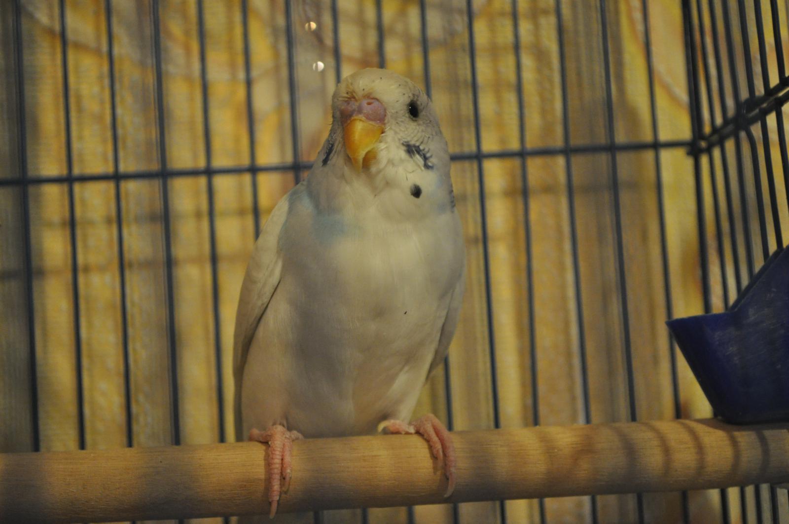 птиц - DSC_1285.JPG
