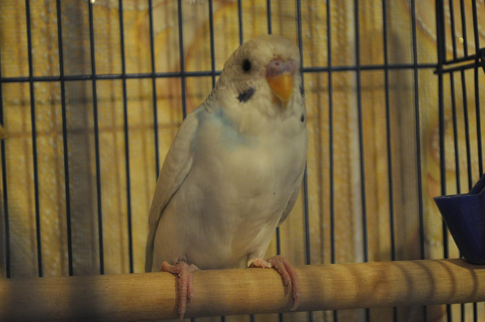 птиц - DSC_1286.JPG
