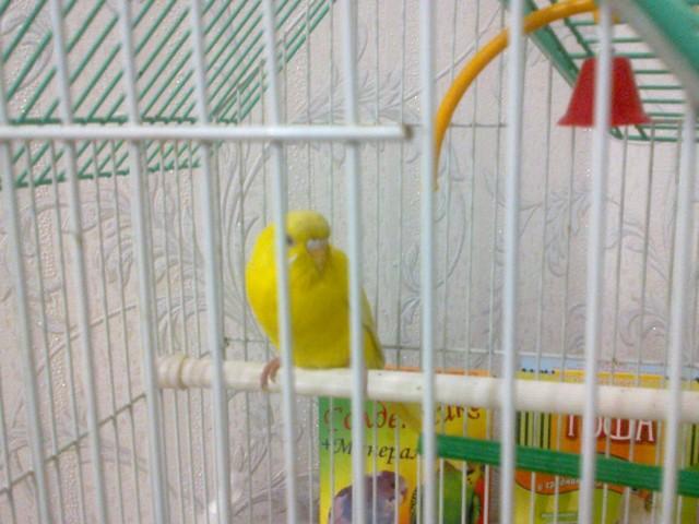 Попугай - 01022012029.jpg