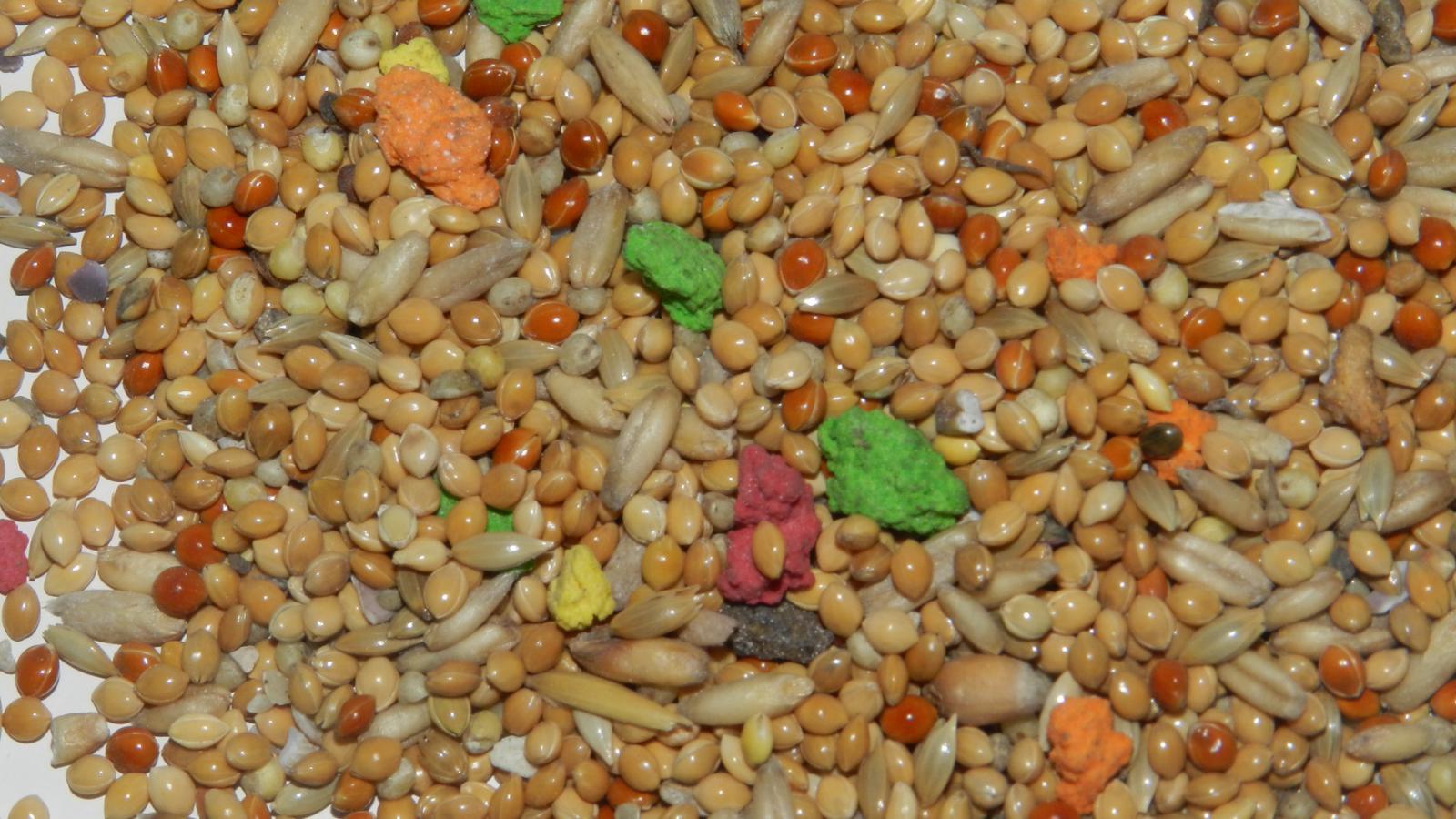 Яркие кусочки печенья, натуральность краски вызывает сомнения - DSCN9213.JPG