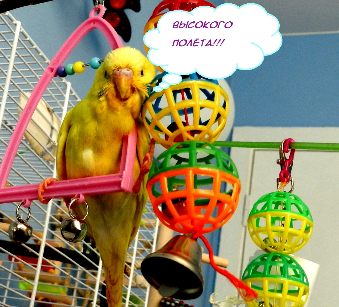 Днем, картинки с днем рождения с попугаем