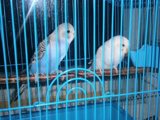 Милаша и Соня - P1200047.JPG