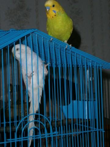 Милаша и Жорка - PC200255.JPG