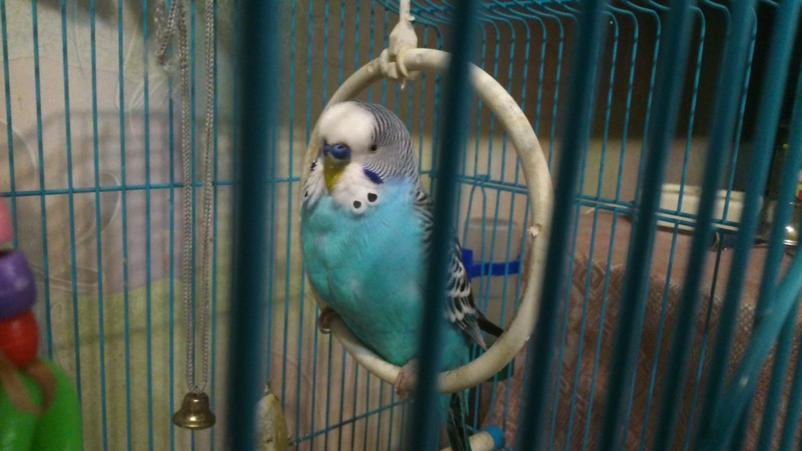 четкая фото птицы - DSC_0281.JPG