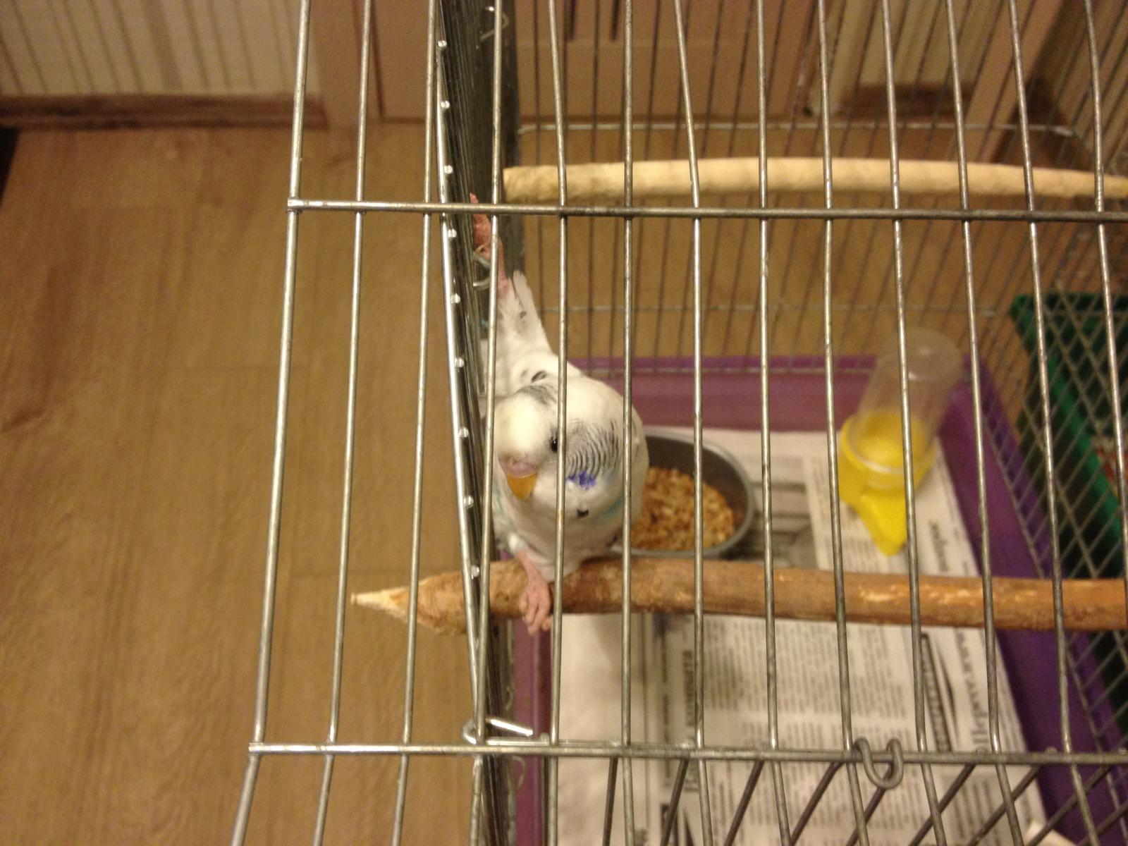 Птица сверху - IMG_0525[1].JPG