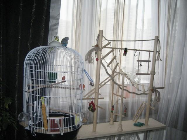 Сонник птиц в клетку сажать 9