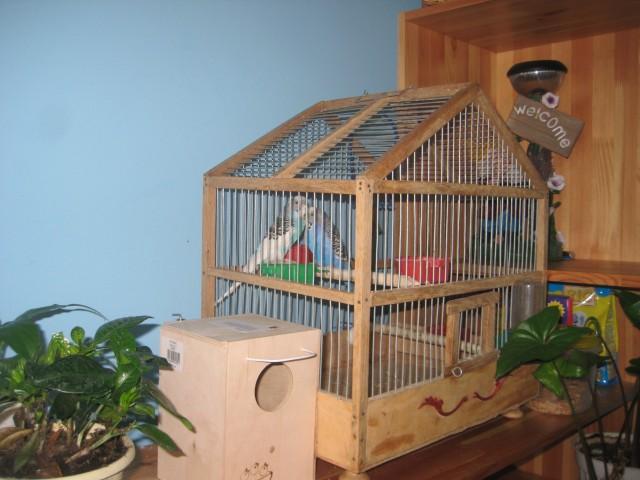 Как сделать домик для попугаев волнистых