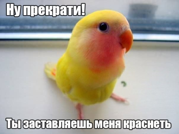 Смешинки на попугая птичью тему - whole_(simple)_leaf1330470102384.jpg