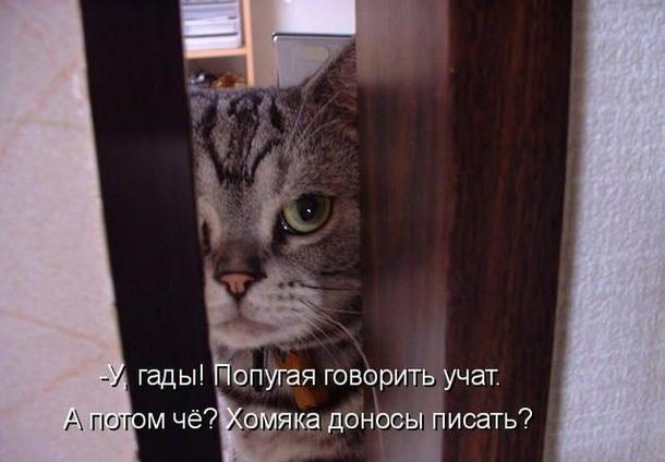 Котик - Котик.jpg