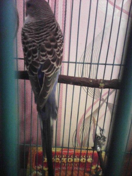 Попугай перестал летать. - mPwmBLERx2Q.jpg