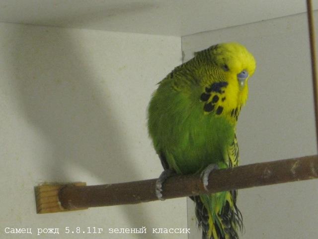 папашка - IMG_4489.JPG