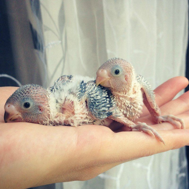 Гнездование Лукаса и Розалиты - 46046307a12a.jpg
