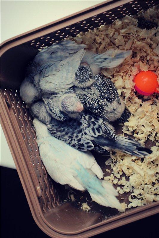 Гнездование Лукаса и Розалиты - 1034ebbe351b.jpg