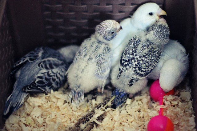 Гнездование Лукаса и Розалиты - 2e93083e299f.jpg
