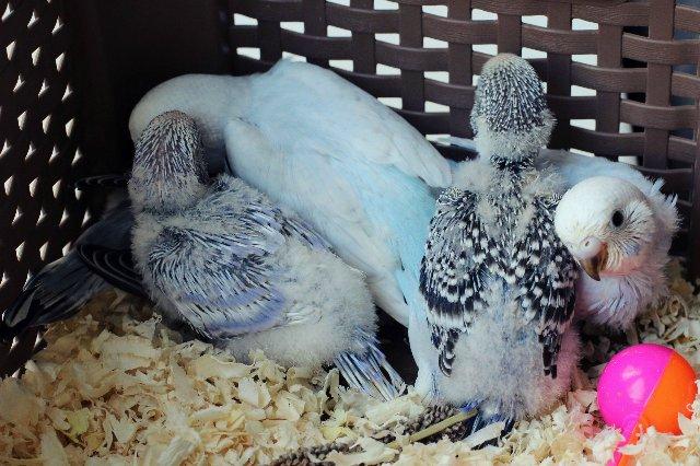 Гнездование Лукаса и Розалиты - 8cb9404df253.jpg