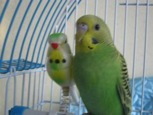 Анкеты птичек. - IMG_137.jpg