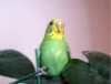 Анкеты птичек. - rtibr.jpg