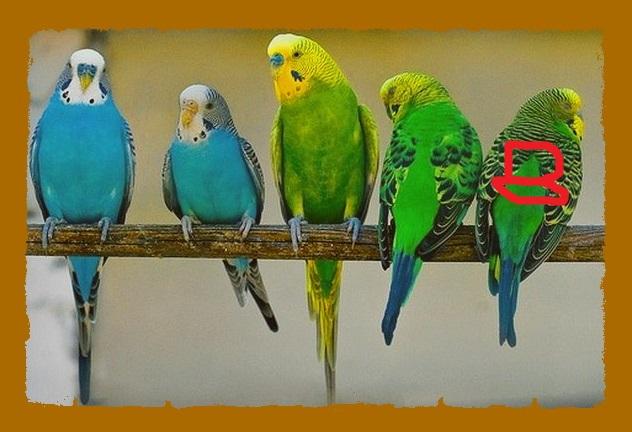 Помогите определить здоров ли попугай? - 540000691.jpg