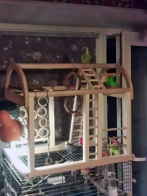 Электрическая Игровые площадки для попугаев своими руками