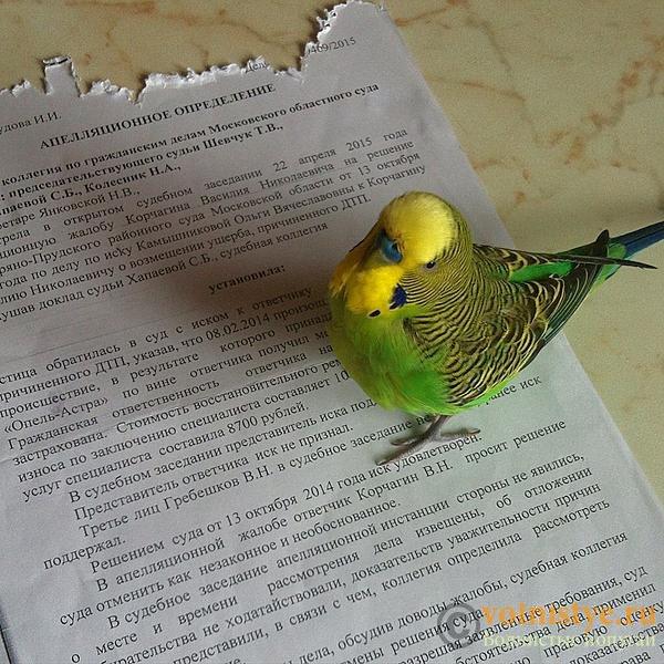 Интресные фотографии попугаев - понять и простить.jpg