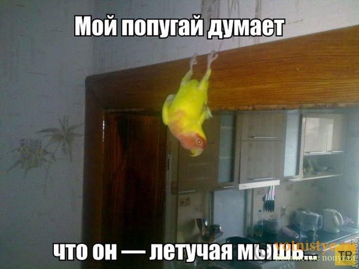 Смешинки на попугая птичью тему - 42a7c05d3bf76412e8d9c86a32af1f01.jpg