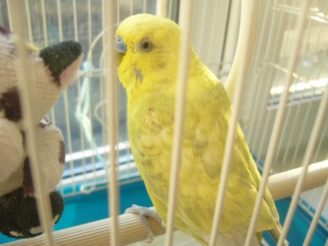 заболел попугайчик - P1030885.JPG
