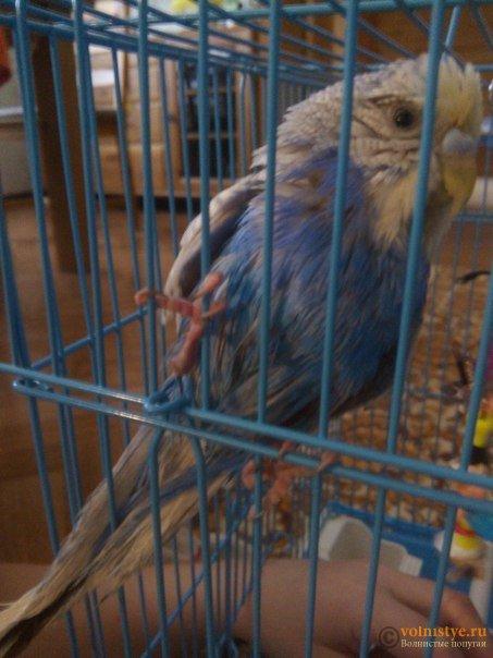 У попугая покраснела кожа - 69u57ipBS6k.jpg