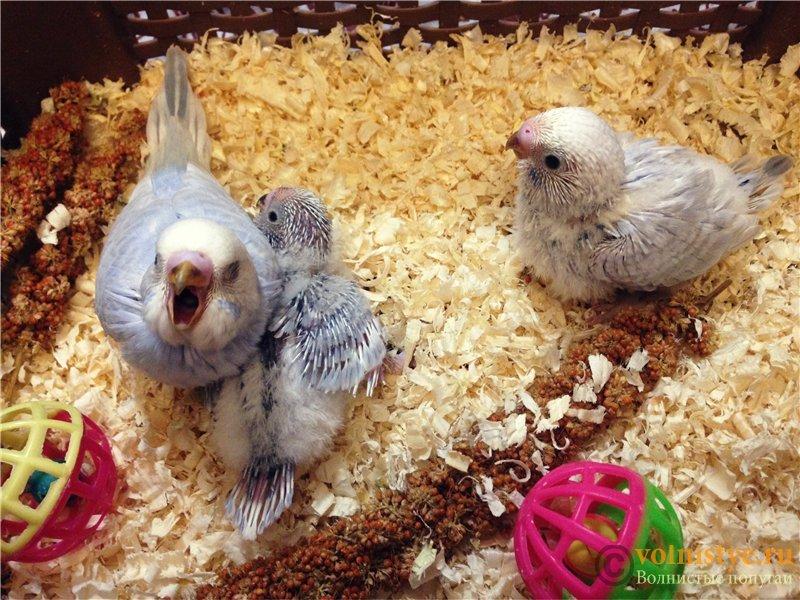 Гнездование Лукаса и Розалиты 2016 - a90b875b1366.jpg