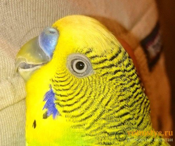 Попугай 2 - DSC_0160.JPG
