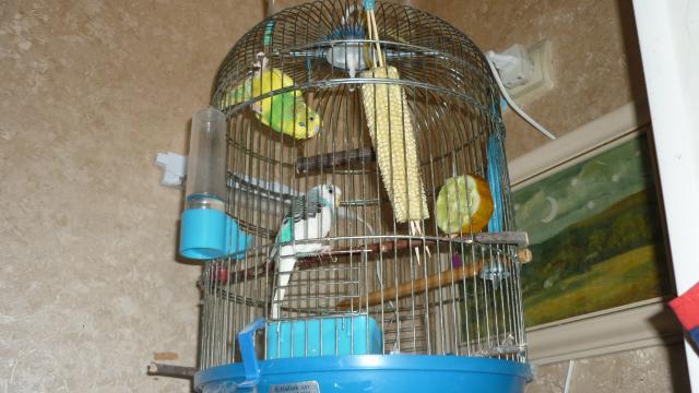 Вот как мы едим кукурузу!!! - P1020712.JPG