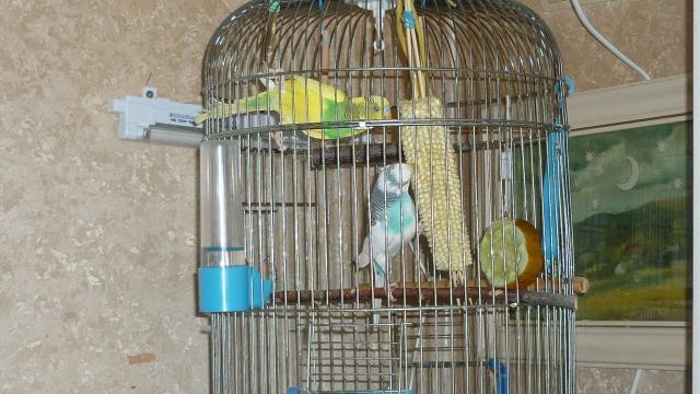 Кукурузка - P1020709.JPG