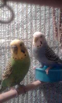мои любимые птички. - 004.jpg