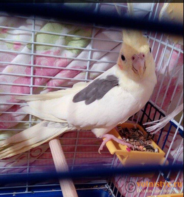 Уже 2 недели у нашей птички жидкий стул ((( - FullSizeRender-02-04-17-02-53.jpeg