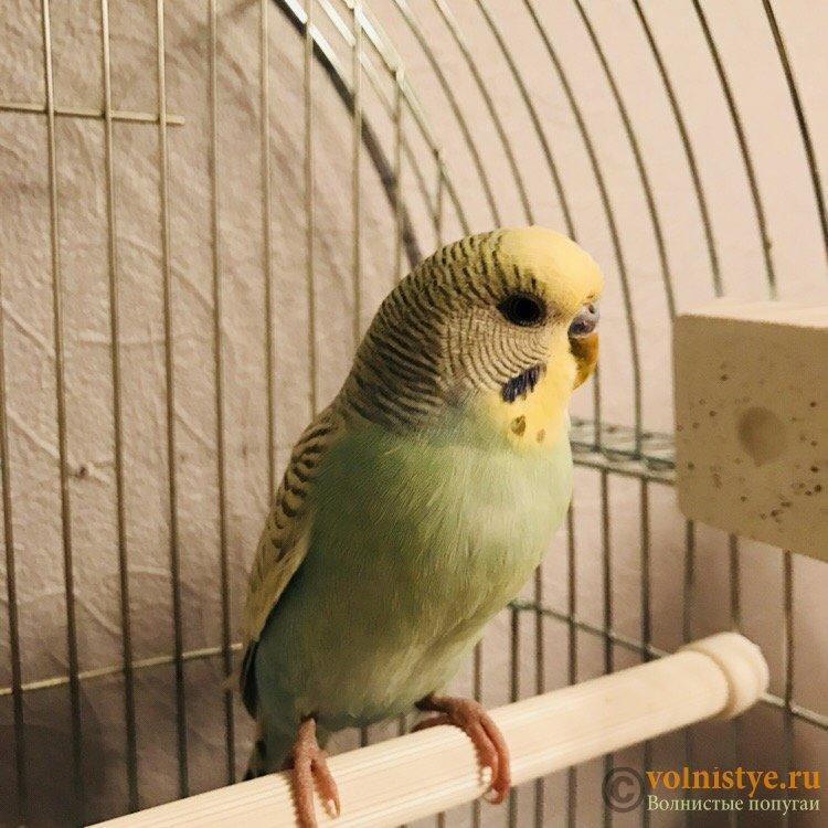 Болен ли попугай? - 8794E88A-A443-40BC-84E5-8EFDFAFCF33D.jpeg