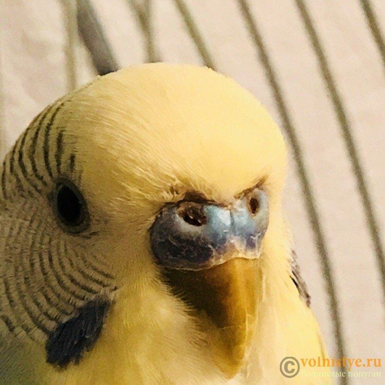 Болен ли попугай? - 81764BE8-694E-4800-977A-0234D8AC8392.jpeg