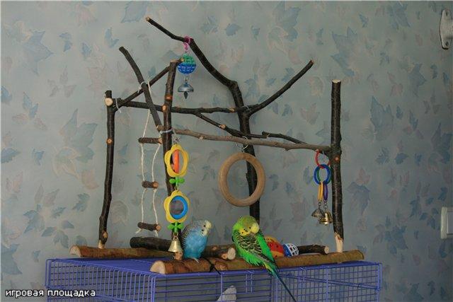 Игрушки волнистых попугаев своими руками фото