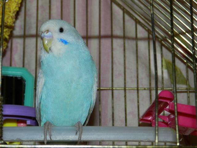 Чикуля!!!гипер активная птичка - U3oMGyDZSpo.jpg