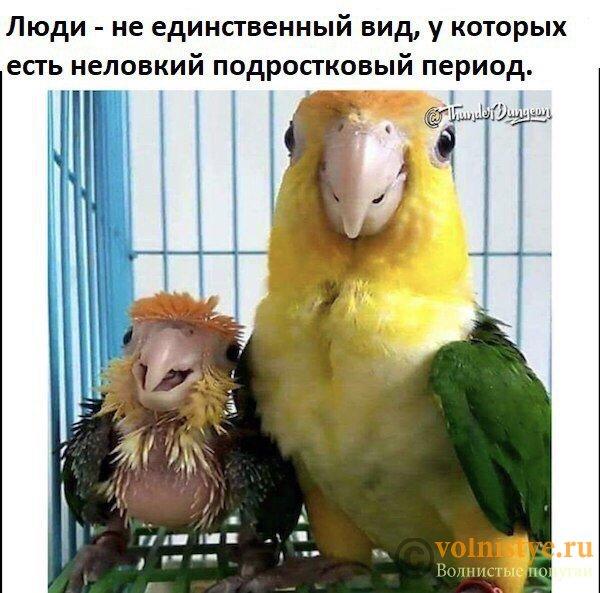 Смешинки на попугая птичью тему - 3rsJsIIVyu8.jpg