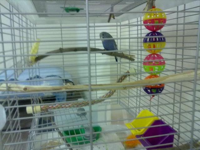 Клетка для больших попугаев своими руками с фото фото 489