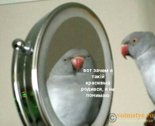 Смешинки на попугая птичью тему - zuFrm2-Lrjk.jpg