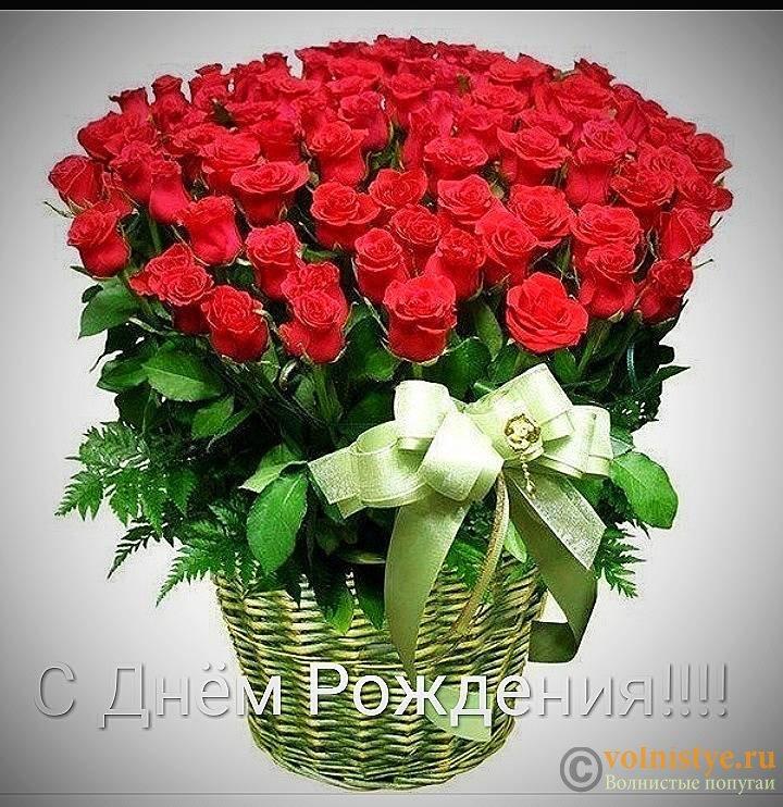 Поздравляем Елену Allona с Днем Рождения! - IMG-0019d3969adf2a6947d645d79398c6ad-V.jpg