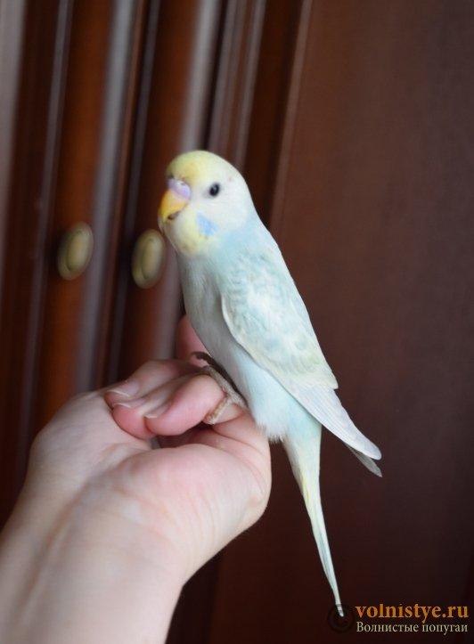 Радужная красота - птенцы от Тора и Мелисы - DSC_6711.JPG