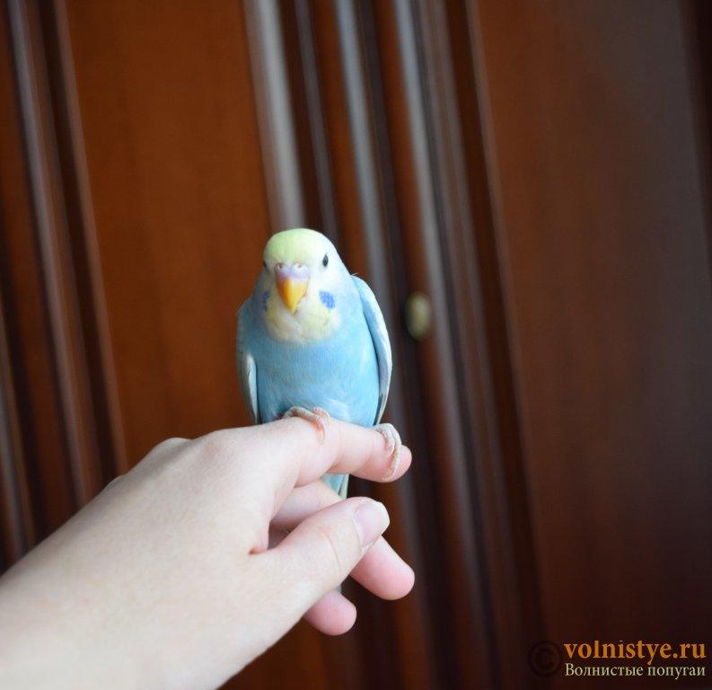 Радужная красота - птенцы от Тора и Мелисы - DSC_6724.JPG