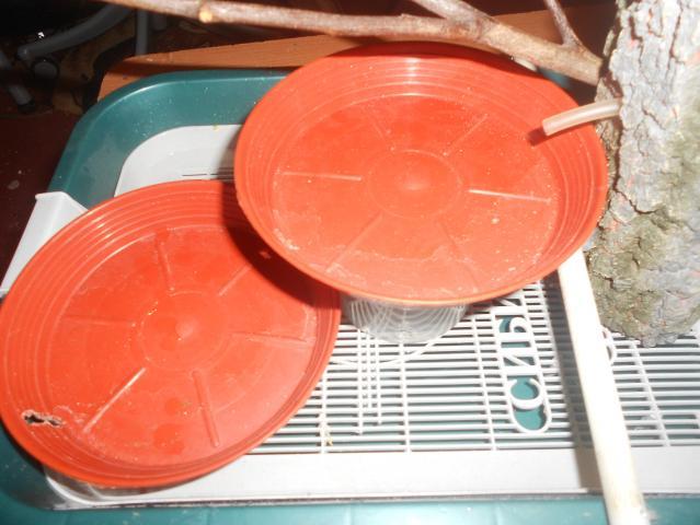 устанавливаем чашки но не приклеиваем их (чтобы проще было потом их мыть) я просто положил в подставки камни для устойчивости - 7.JPG