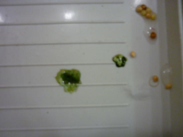а это фото после того как помыли под хвостом и так он потом сходил в туалет. - Изображение 150.jpg