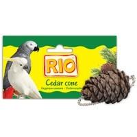 Кормление волнистых попугаев - 2096611.jpg