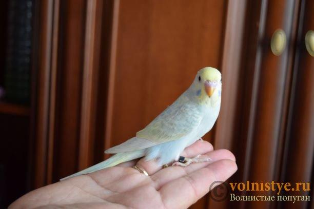 Радужная красота - птенцы от Тора и Мелисы - DSC_7456м.JPG