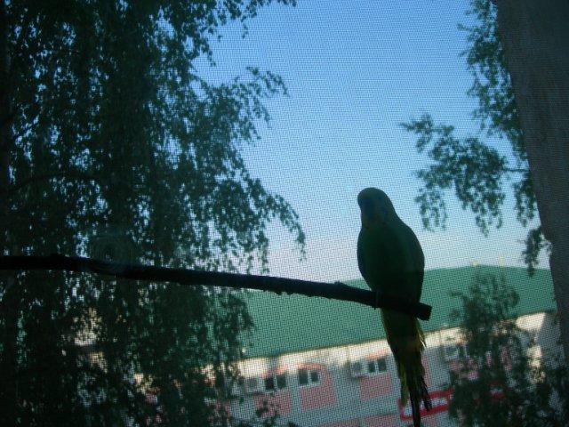 Спасение волнистого попугая. - тор4.jpg